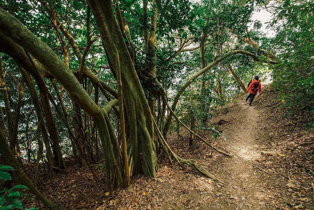 步道健行/屏東/阿朗壹古道/熱帶雨林/原始森林/台版亞馬遜雨林