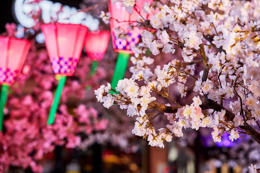 台灣三井OUTLET台中港/台中/櫻花季/春櫻花見祭/櫻花神社公園