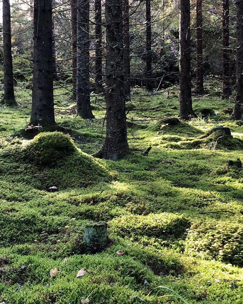 森林/Metsä/Skogen/赫爾辛基機場/芬蘭