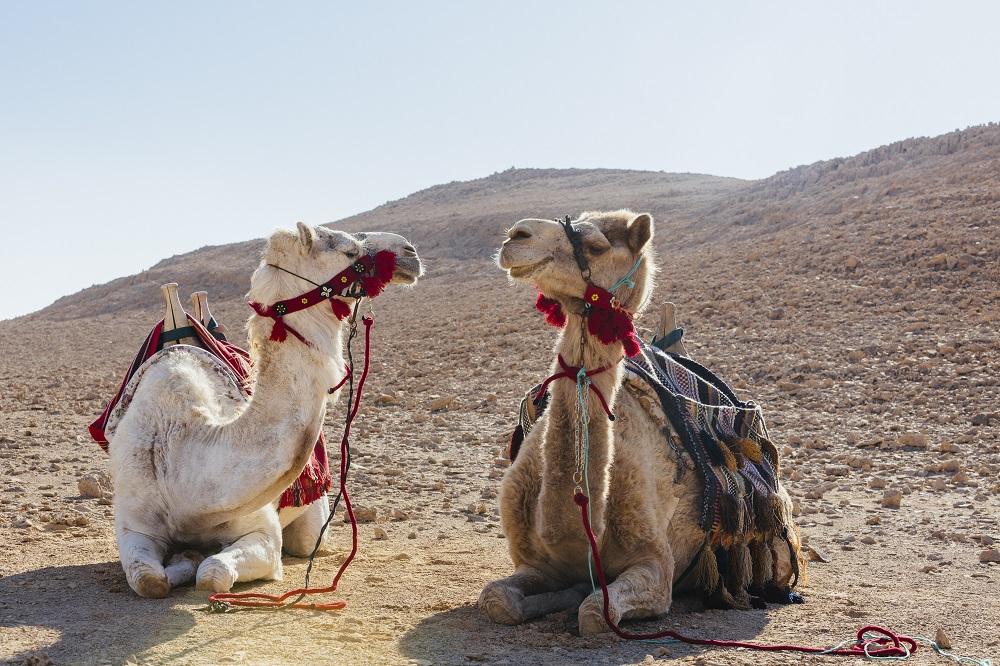 撒哈魯特六善酒店/沙漠/駱駝/以色列