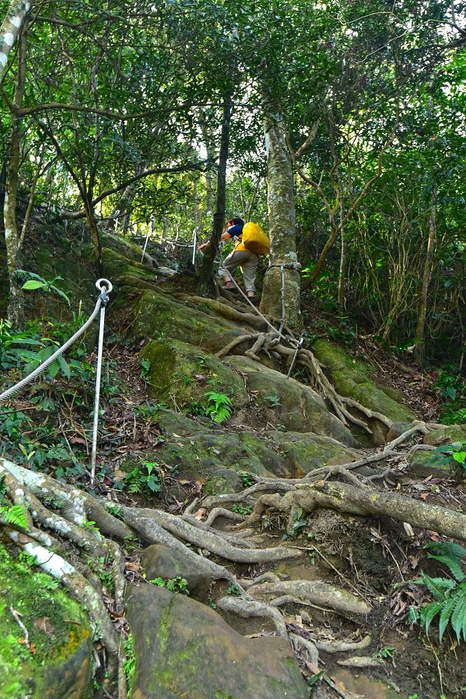五寮尖步道/登山步道/登山挑戰/樹木根系/攀爬