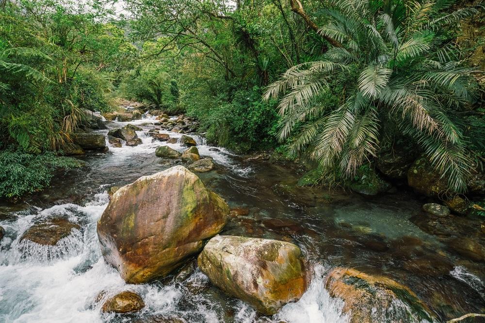 宜蘭/健行/松羅國家步道/溪石/台灣的亞馬遜雨林