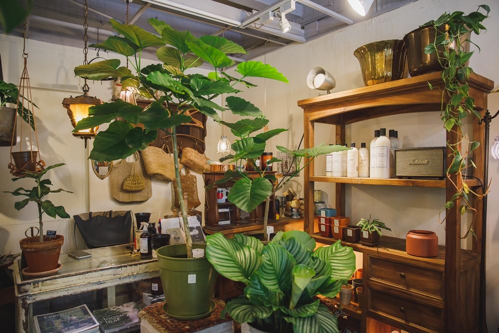 MRS. INOUE/植物雜貨店/生活品味/東區/台北