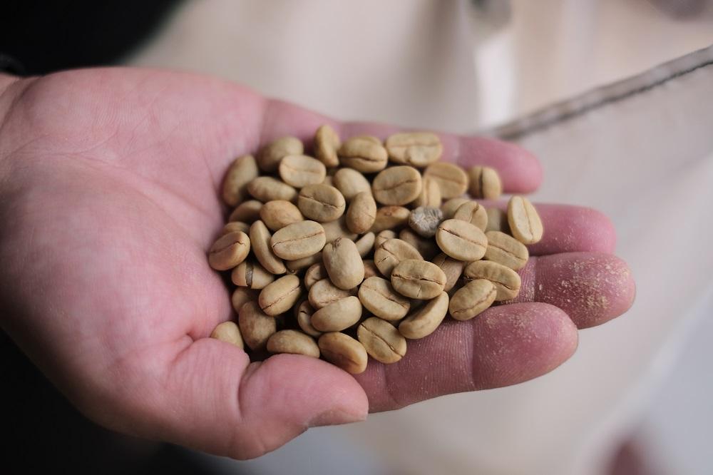 咖啡豆 /宿瓦納咖啡 /樂野社區/阿里山/嘉義/深度旅遊