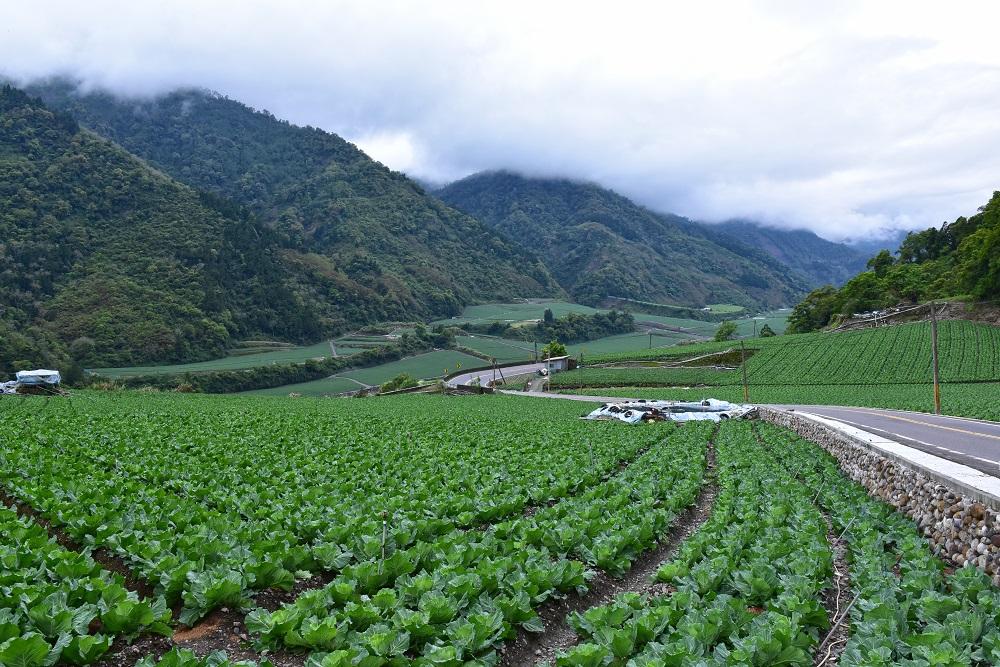 原生種獼猴桃/羅葉尾溪畔步道/南山部落/宜蘭/台灣/深度旅遊