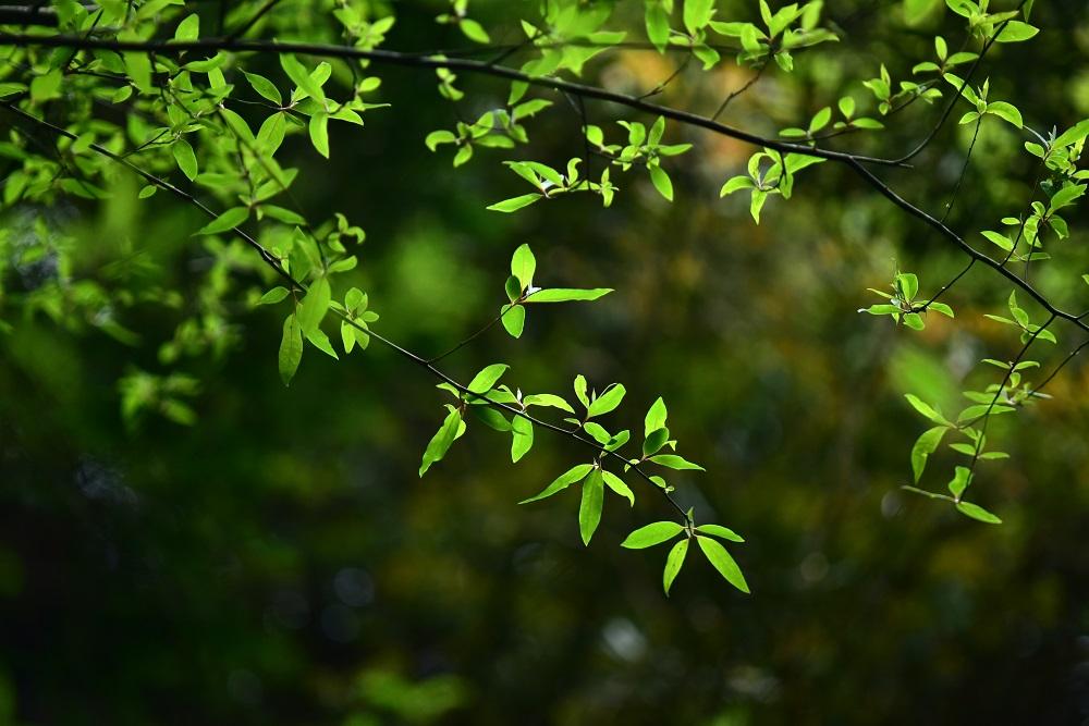 植物/羅葉尾溪步道/南山部落/宜蘭/台灣/深度旅遊