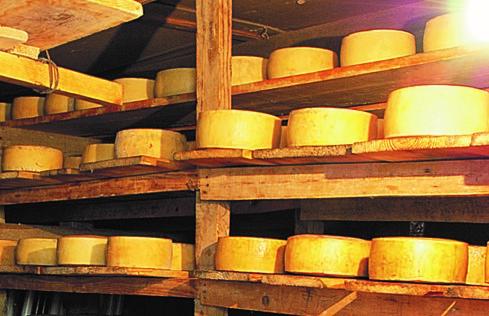 克羅埃西亞必買羊乳酪