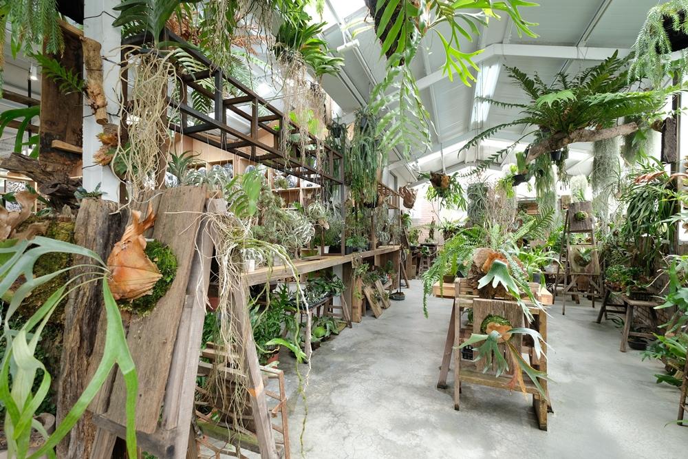 蔬食/空氣圖書館/植物/大自然/嘉義/台灣