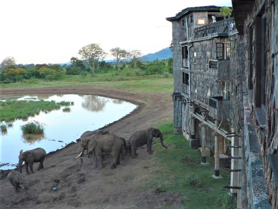 肯亞/樹頂旅館/Treeptops/非洲