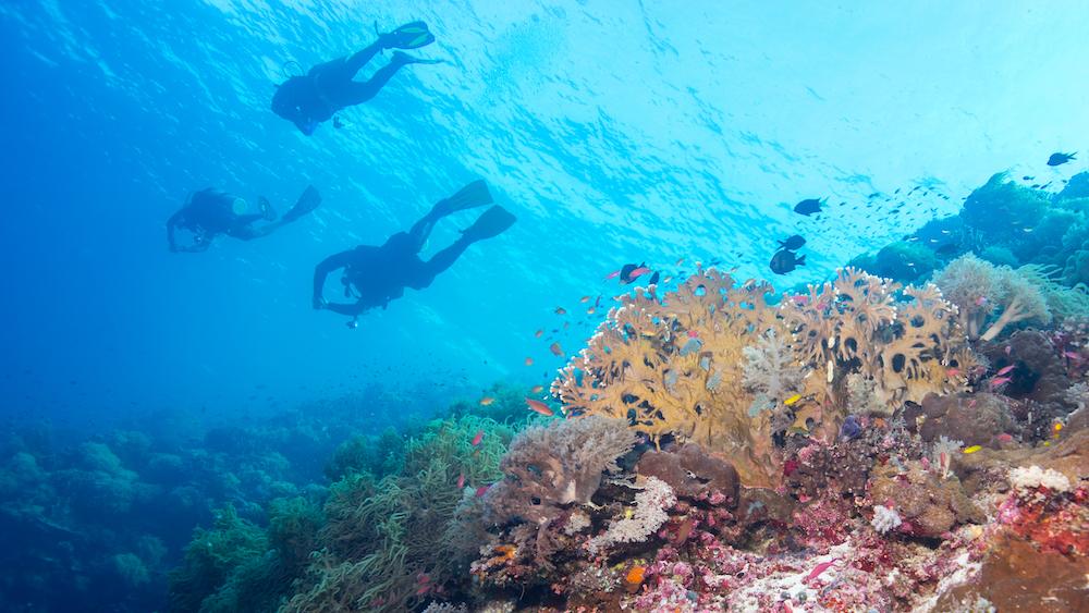圖巴塔哈群礁/Tubbataha Reef /菲律賓/潛水勝地