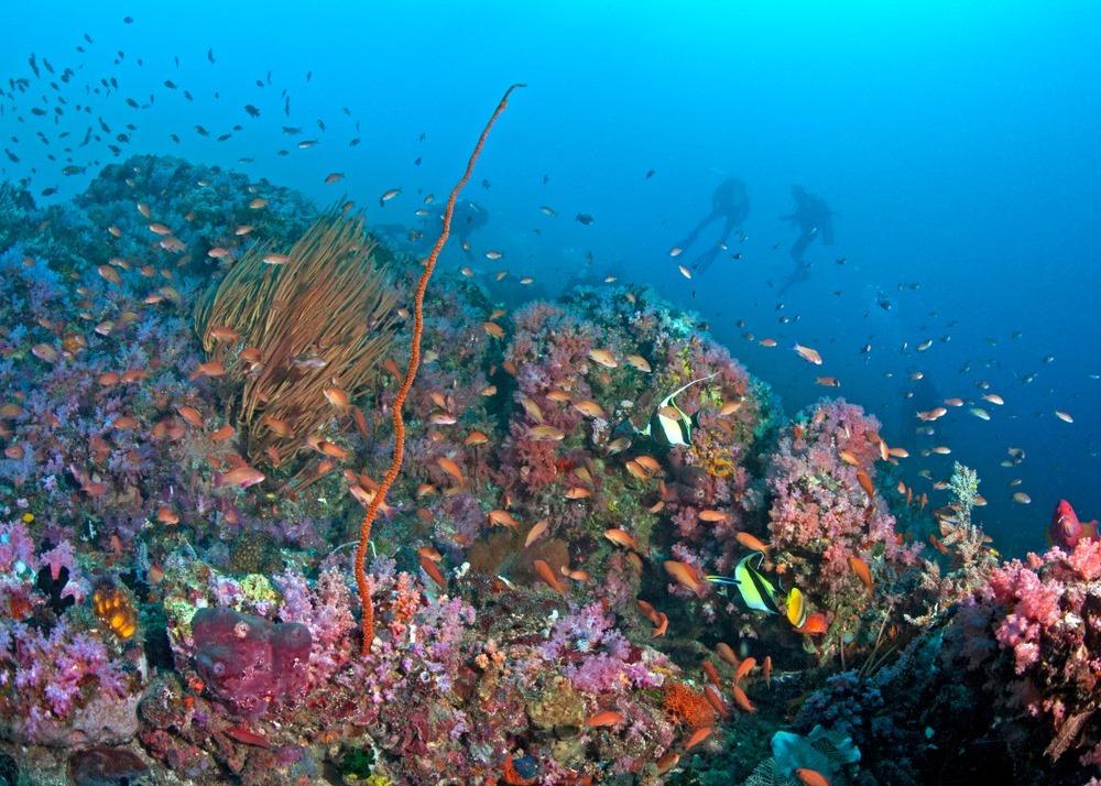 海豚灣/Puerto Galera/菲律賓/潛水勝地