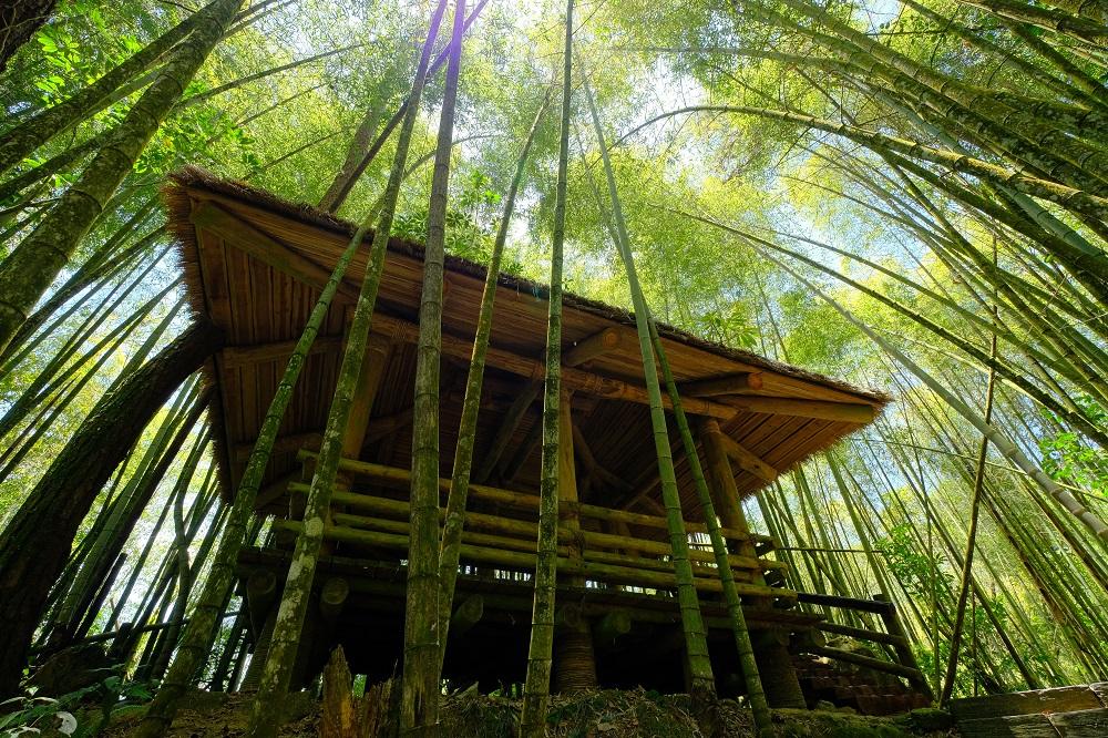 咖啡樹/宿瓦納咖啡茶園/樂野部落/阿里山/台灣/深度旅遊
