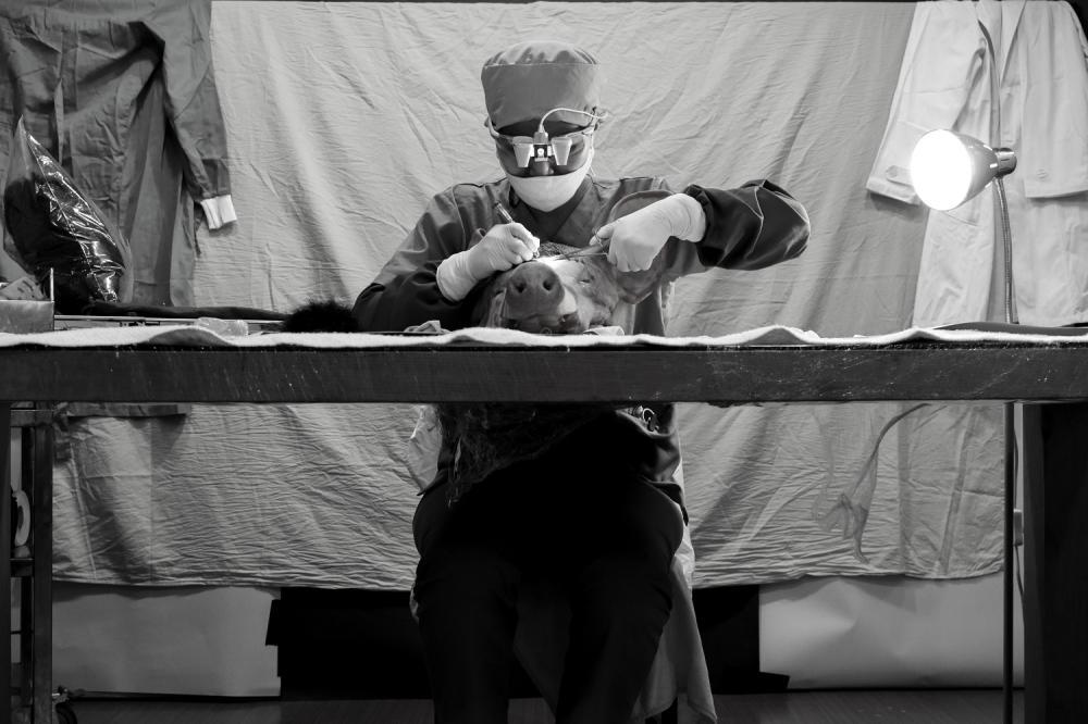 〈肉身計畫謬思的外科手術厚植〉作品/禽獸不如--2020台灣美術雙年展/國立臺灣美術館/台中/台灣