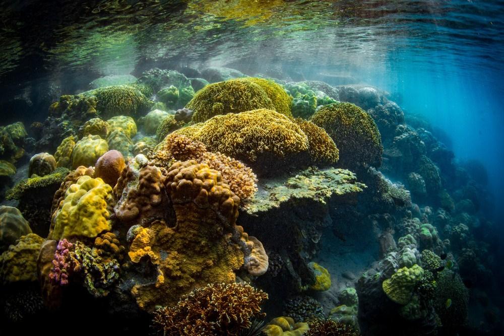 珊瑚礁/台泥DAKA/宜蘭/台灣