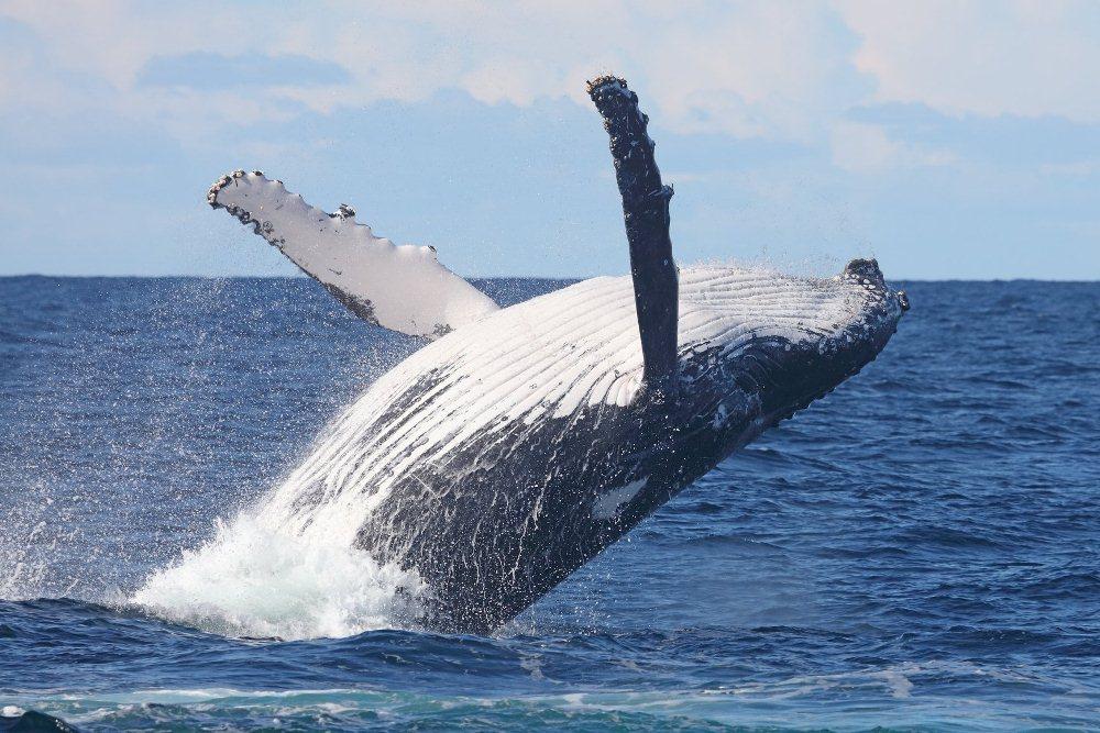 鯨魚/海陸雙重動物遷徙套裝行程/Hemingways Collection/2021行程/肯亞/非洲