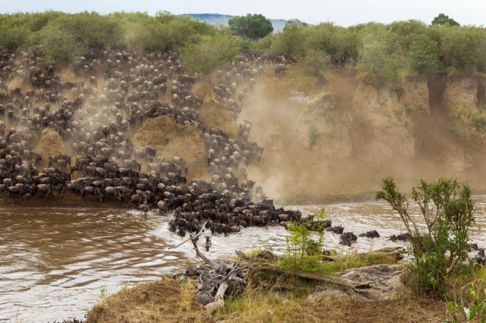 牛羚/海陸雙重動物遷徙套裝行程/Hemingways Collection/2021行程/肯亞/非洲