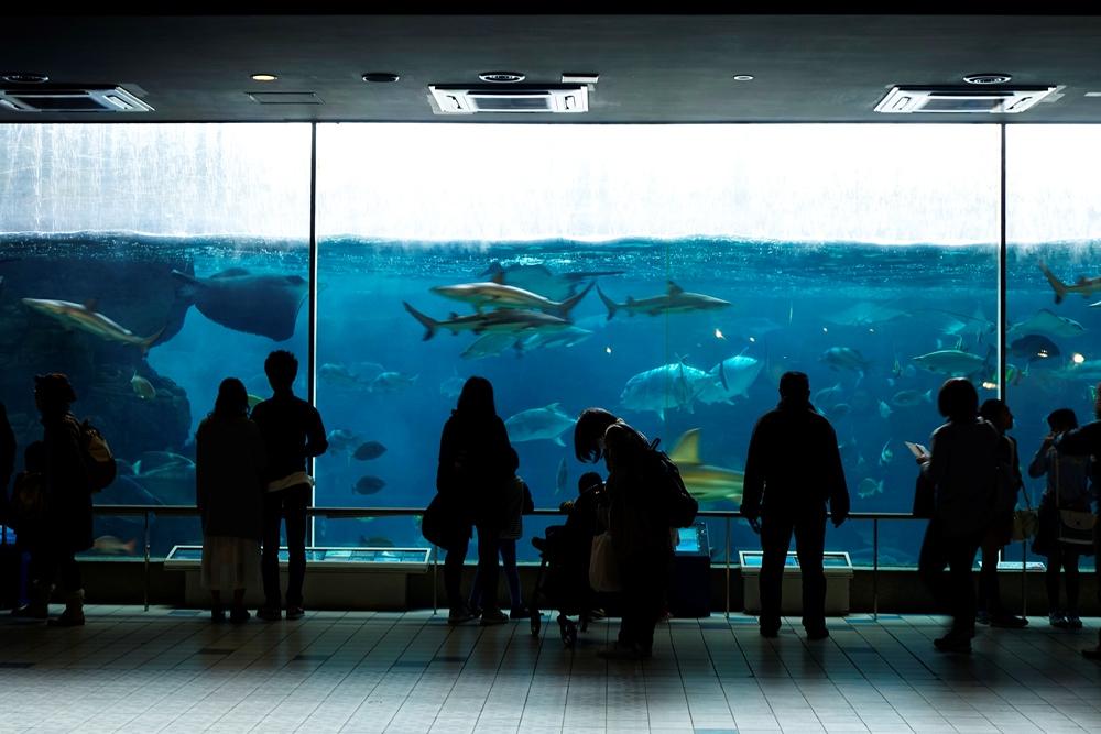 海洋生物/須磨海濱水族園/神戶/日本