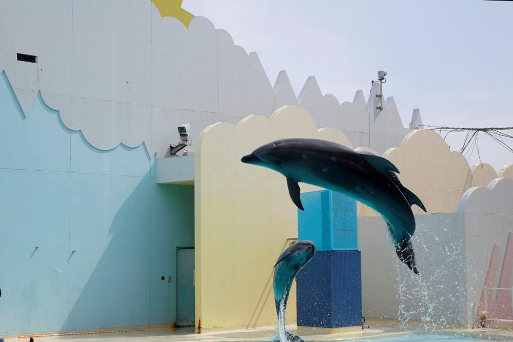 海豚/海洋生物/須磨海濱水族園/神戶/日本