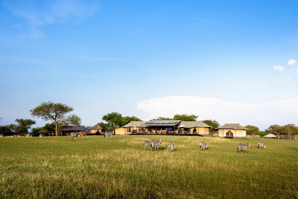 動物/safari/Sabora Tented Camp/旅遊/肯亞/非洲