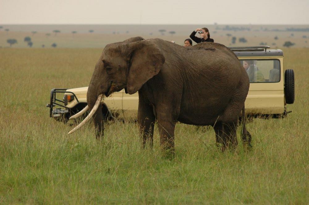大象/動物大遷徙/旅遊/肯亞/非洲