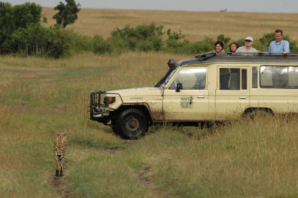 花豹/動物大遷徙/旅遊/肯亞/非洲