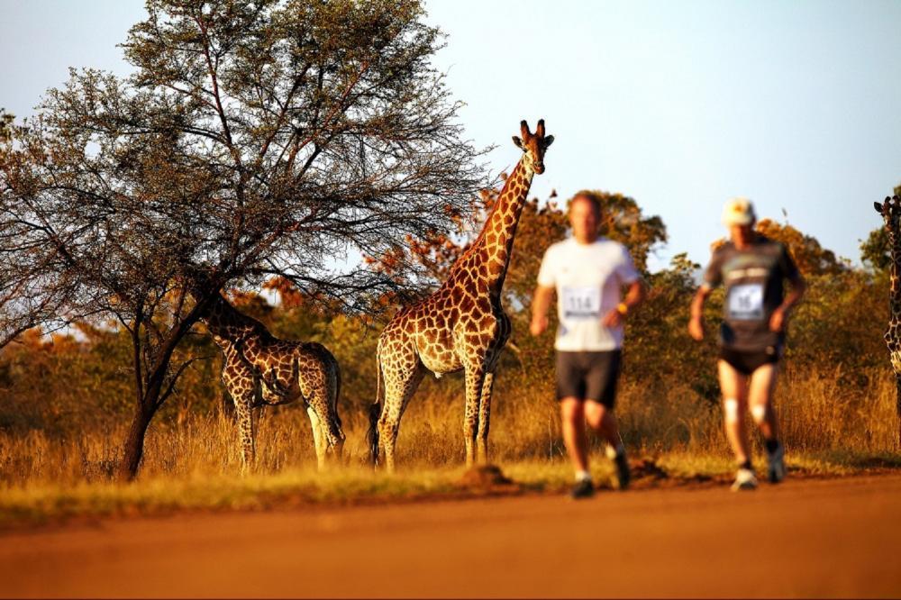馬拉松/動物大遷徙/Big Five/旅遊/肯亞/非洲