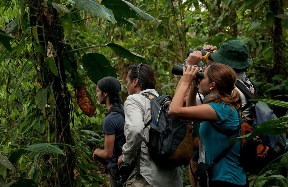 賞鳥愛好者/Mashpi Lodge/私人森林/旅館/厄瓜多