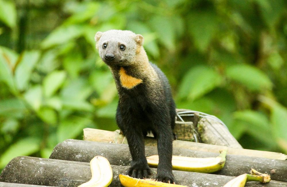 稀有動物/Mashpi Lodge/私人森林/旅館/厄瓜多