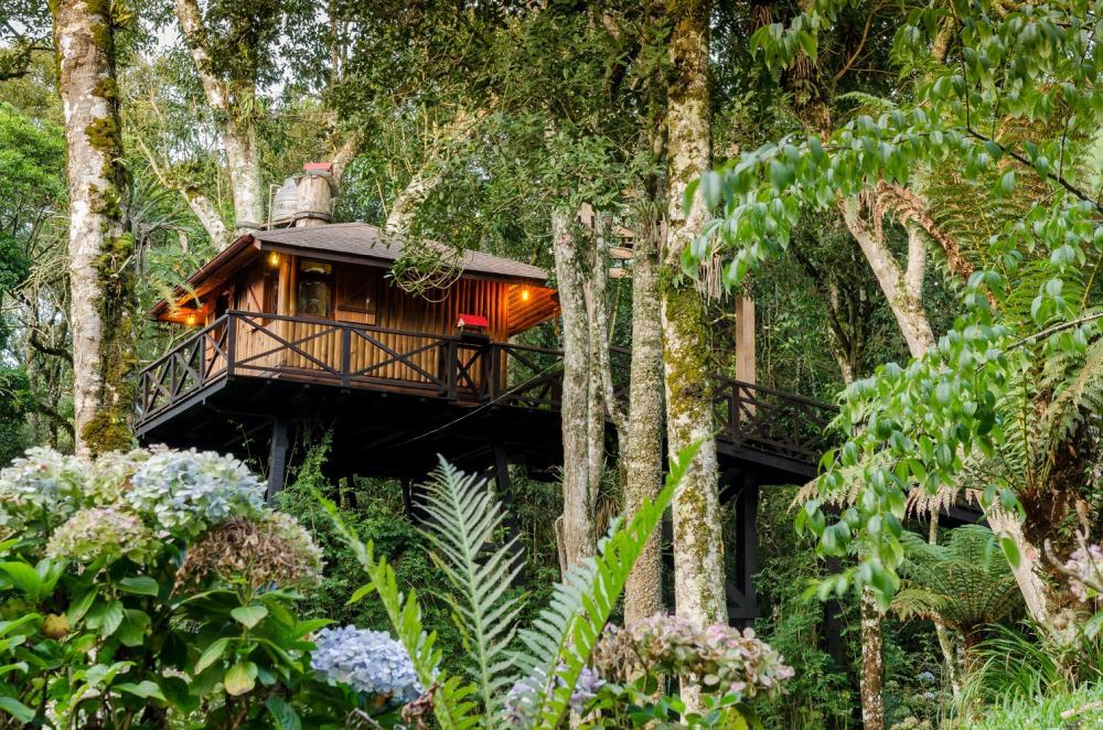 樹屋度假/Airbnb/米納斯吉拉斯/巴西
