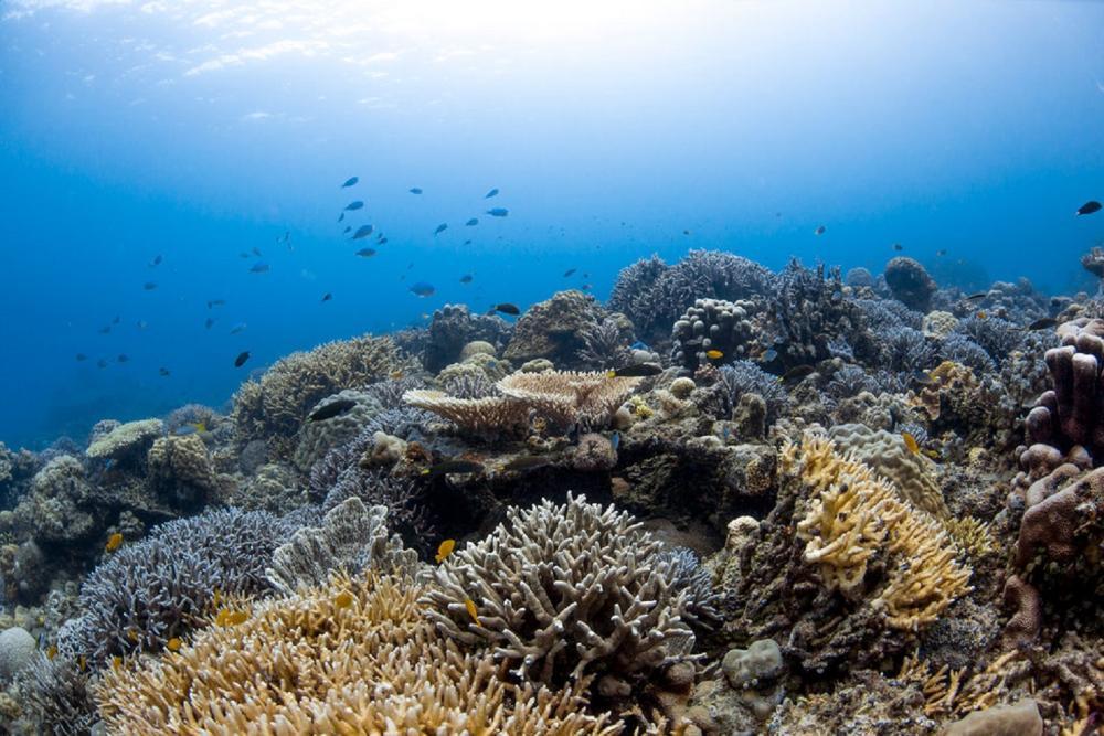 珊瑚礁/Bawah Reserve/阿南巴斯群島/印度