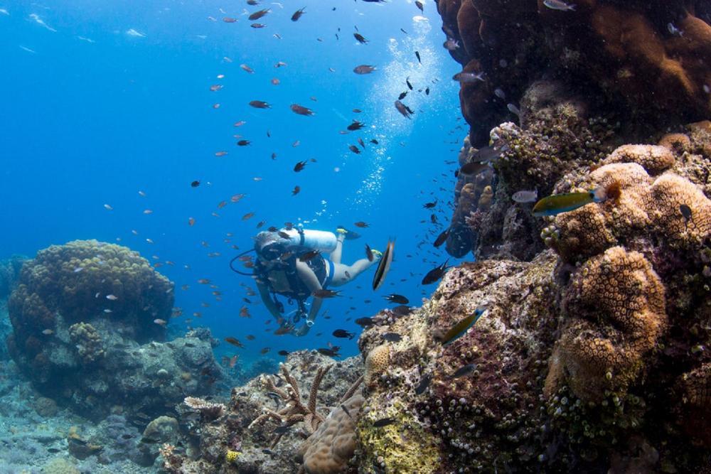 潛水/Bawah Reserve/阿南巴斯群島/印度