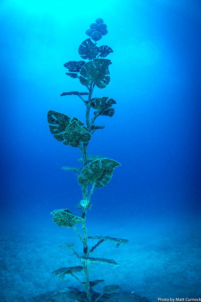 雕像作品/The Museum of Underwater Art/潛水/海洋博物館/昆士蘭/澳洲