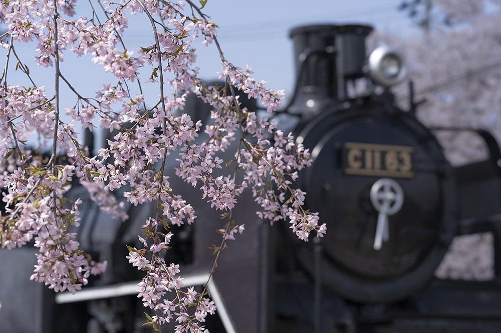 東日本鐵道假期/JR/賞櫻/旅遊/日本
