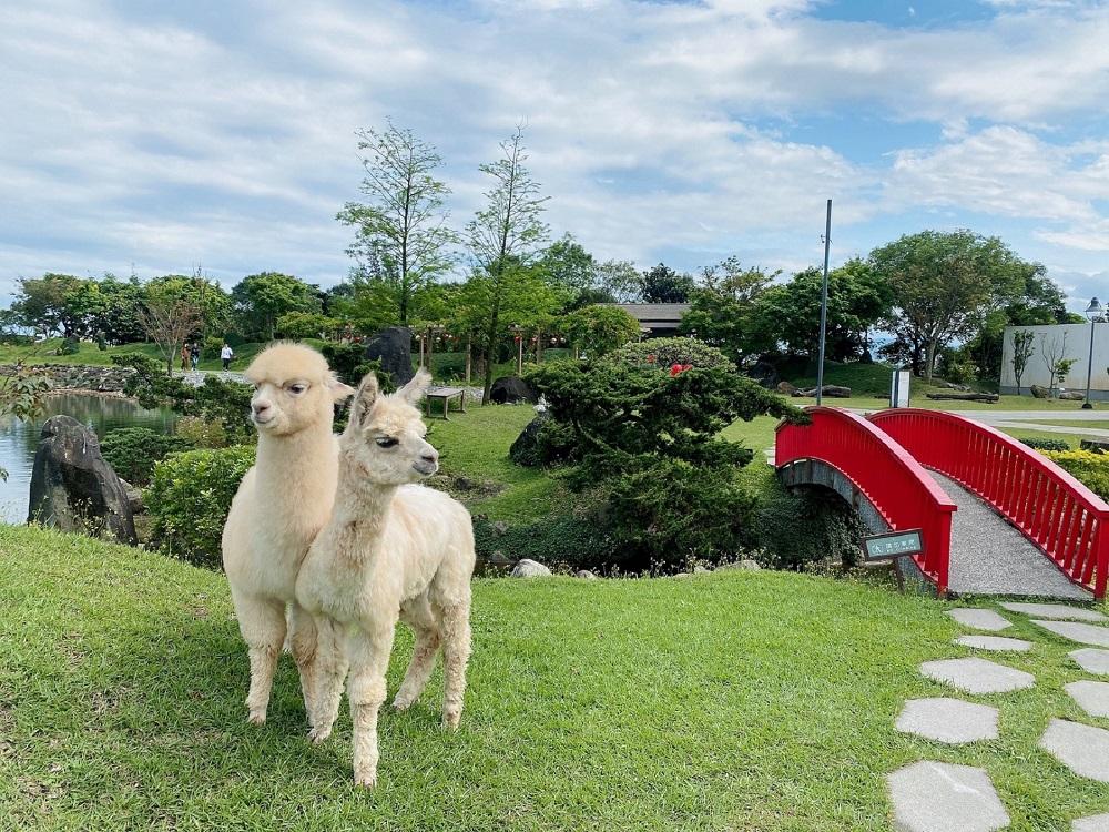羊駝/宜蘭綠舞國際觀光飯店/住房專案/飯店/宜蘭/台灣