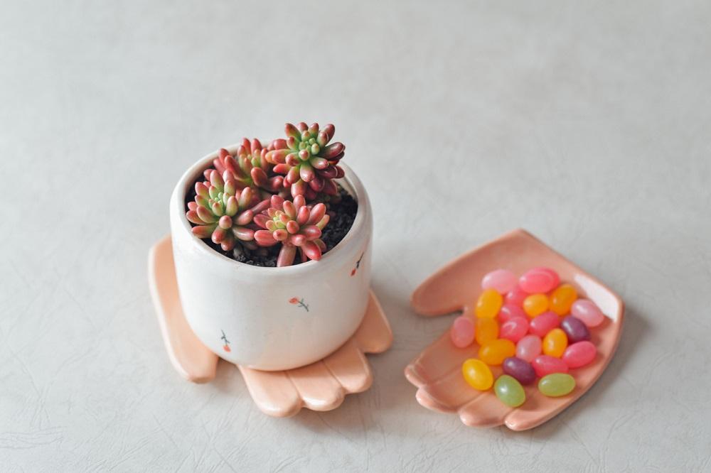虹之玉錦/有肉Succulent & Gift/多肉植物/台灣