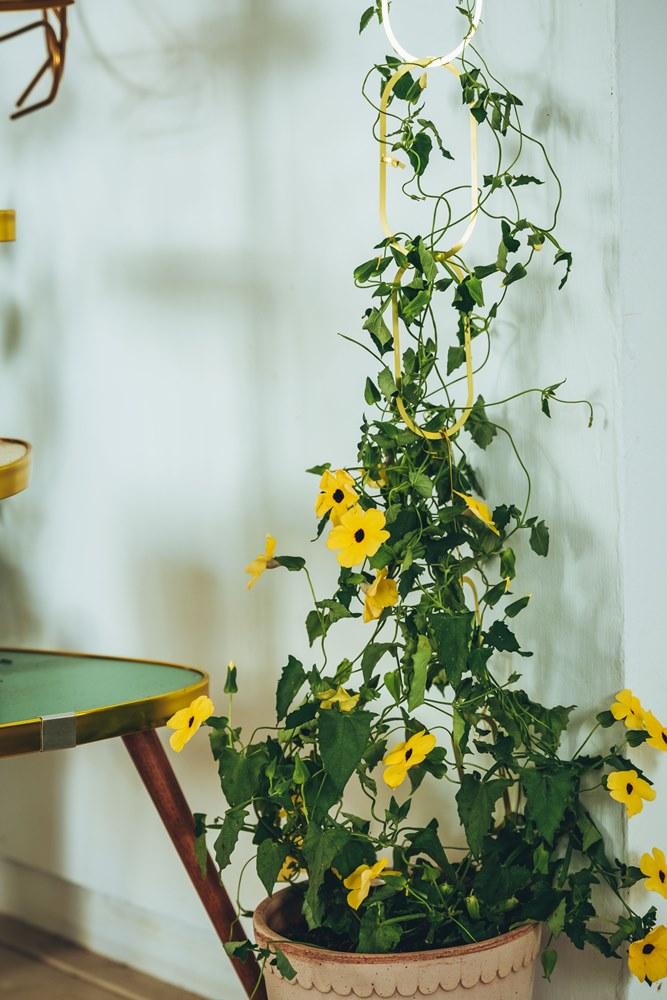Botanopia Brass Support for Climbing Plants/hütte棚