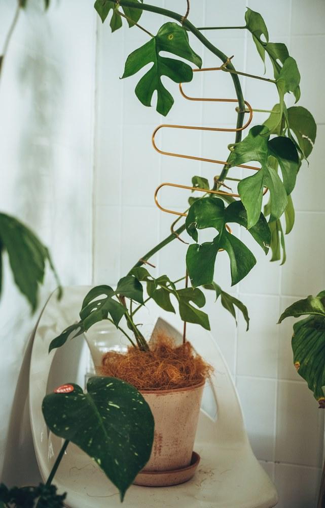 Botanopia 彎曲型黃銅植物支撐架/hütte棚屋/植栽選物店/大安區/台北/台灣