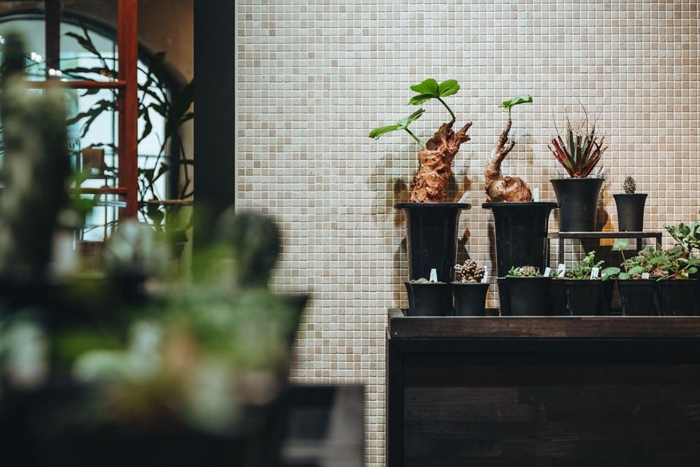 盆栽/0343 Conservatory/植栽選物店/大安區/台北/台灣