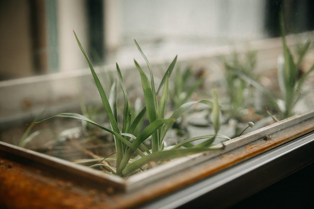 草/內部空間/微生 Float Dept./咖啡廳/美食/新竹/台灣