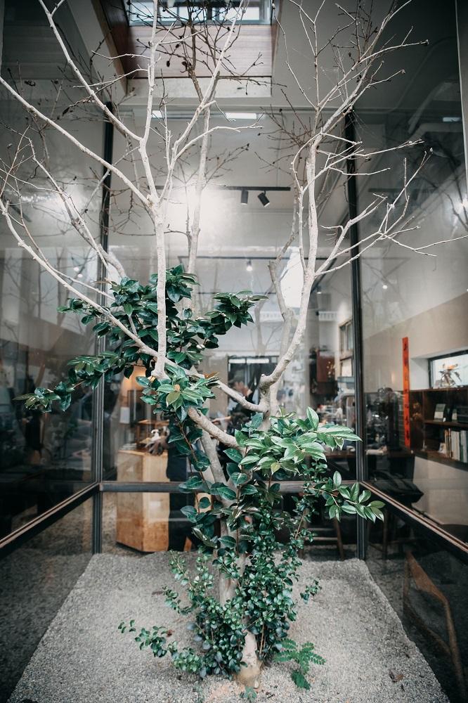 樹/內部空間/微生 Float Dept./咖啡廳/美食/新竹/台灣