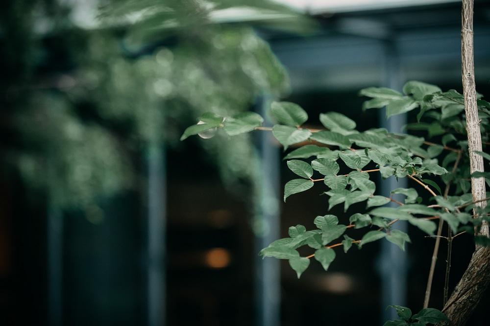 綠意/東厚食Cafe/森林咖啡/美食/新竹/台灣