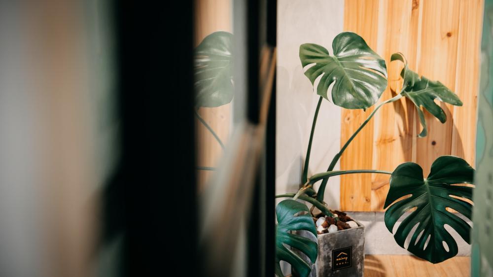 植栽/或者工藝櫥窗/複合式咖啡廳/新竹/台灣