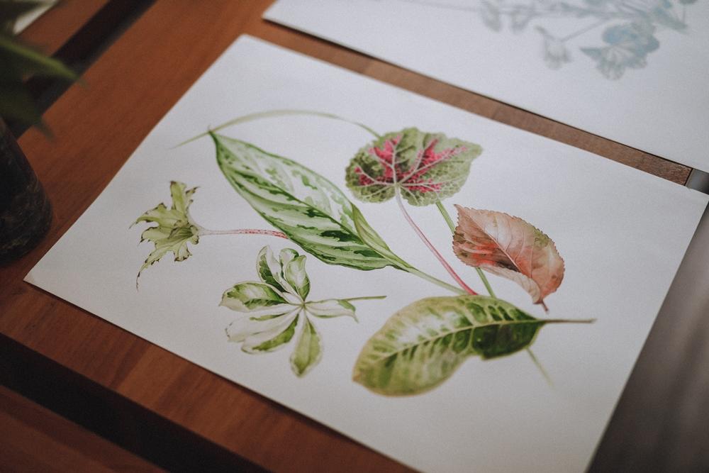 手繪/植物/大自然/北鳥老師/台北/台灣