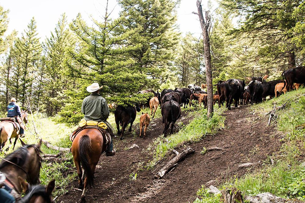 大自然風景/The Dude Ranchers' Association/牧場/西部/美國