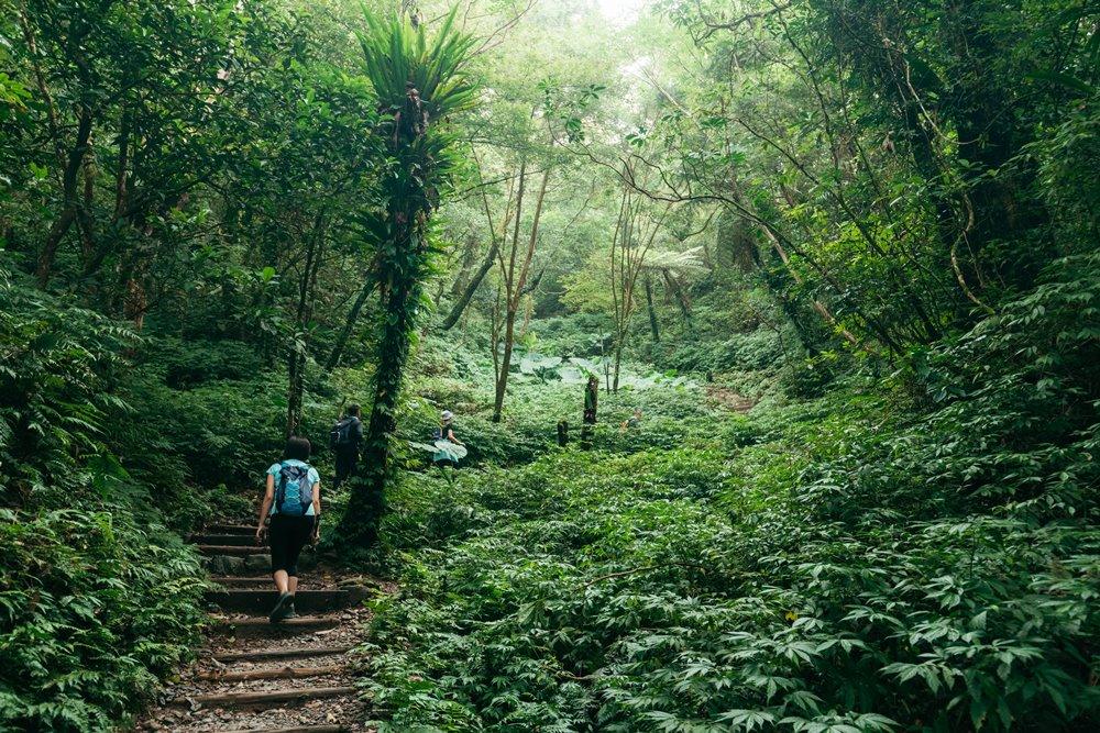 宜蘭抹茶山(聖母山步道)/旅遊/宜蘭/台灣