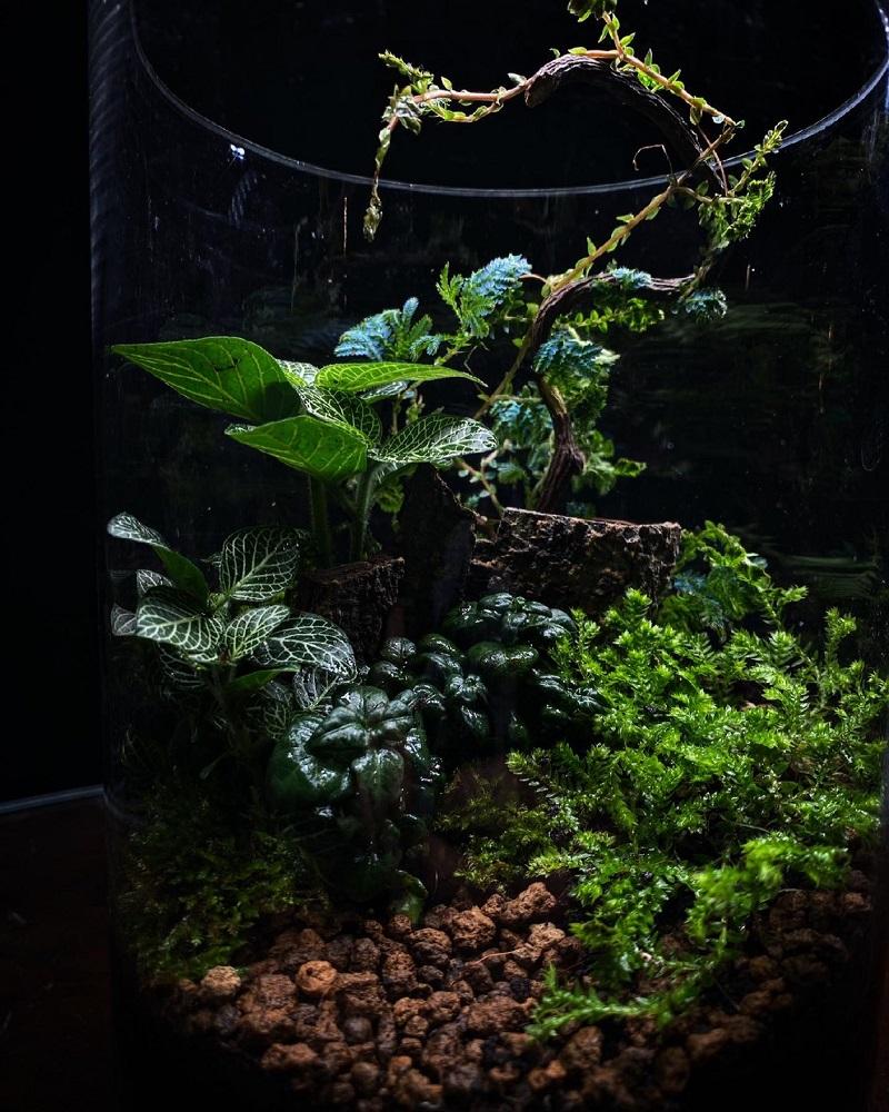 生態系/煙花蕨醒 Hanabi Plant/花藝/創意生活/台灣