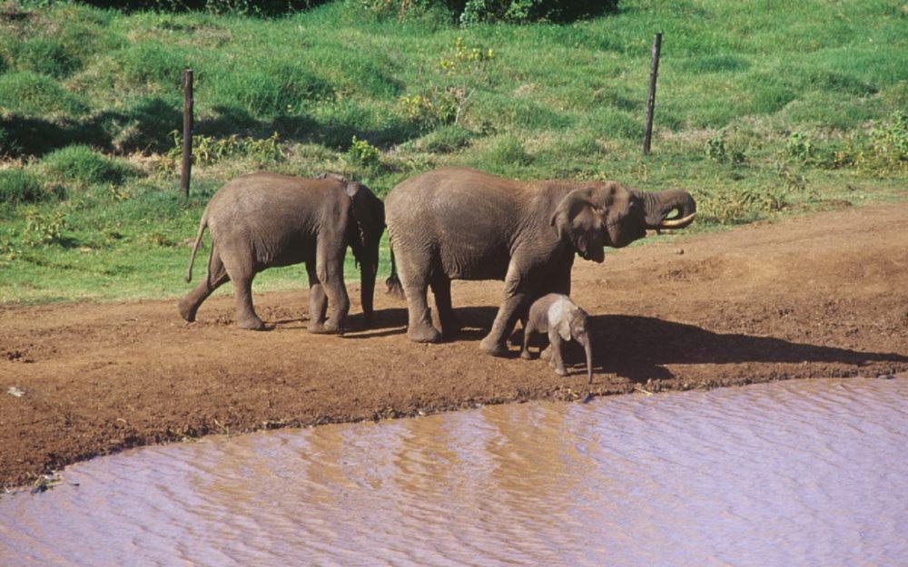 大象/大型動物/台灣