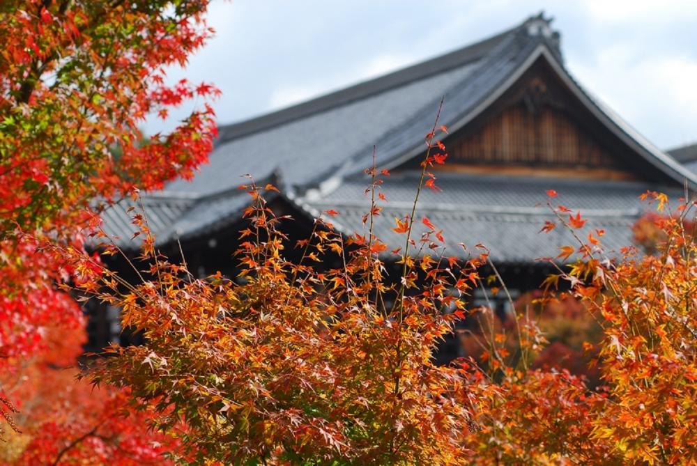 楓葉/東福寺/京都/日本
