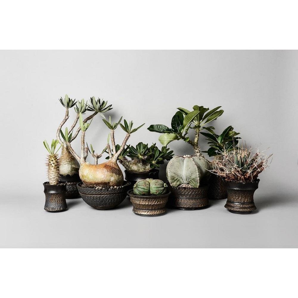 植物/BOTANIZE/橫町健/植物專賣店/日本