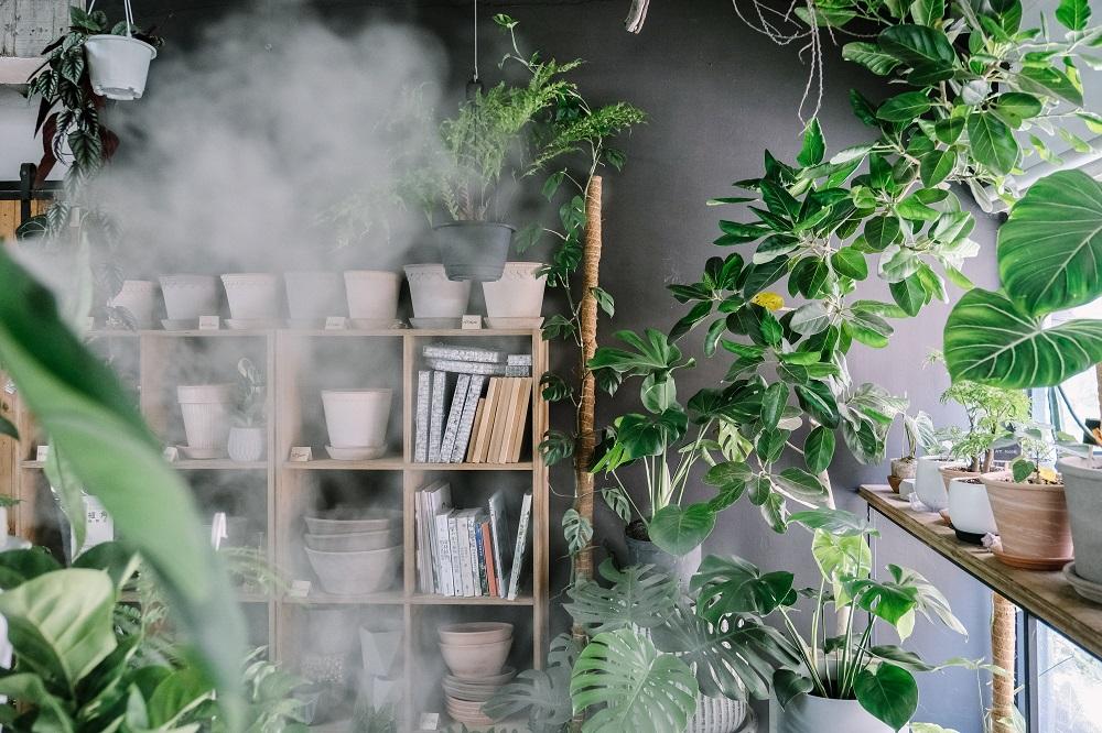 盆栽/Corner Green植角工作室/植物/創意生活/新竹/台灣